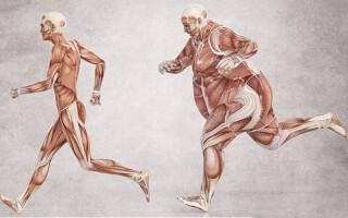 Где вырабатывается инсулин и его роль в организме человека