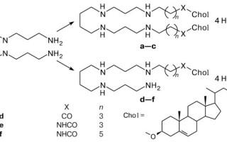 Синтез холестерина в организме человека